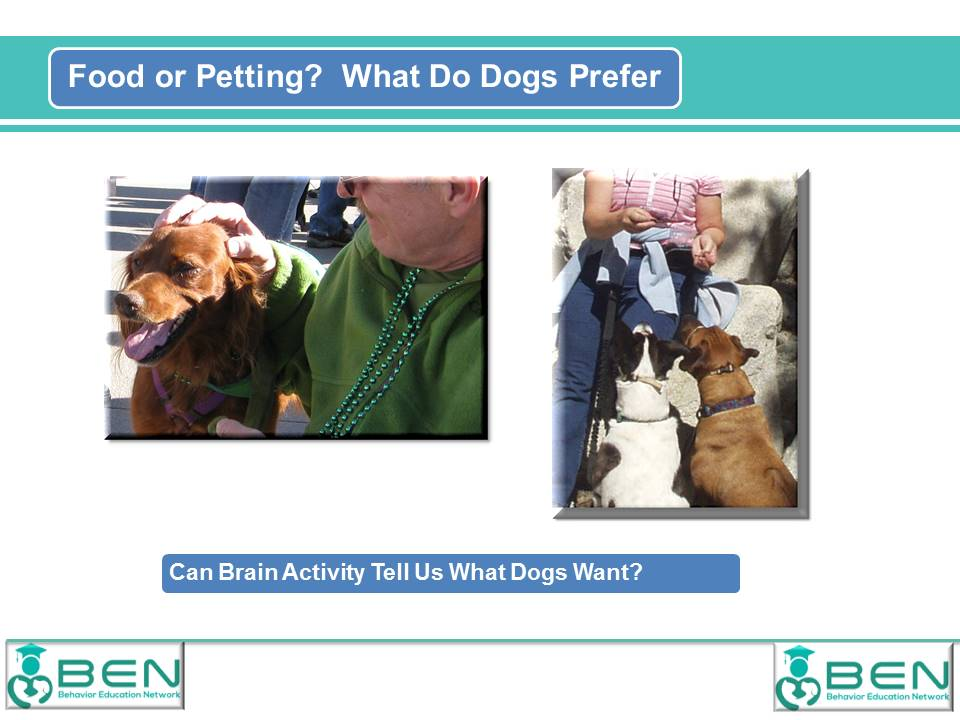 what-dogs-prefer-graphic
